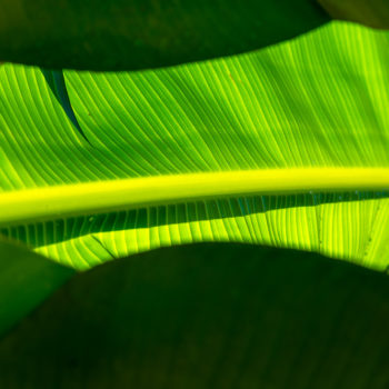 Jamaica Palm Leaves 3