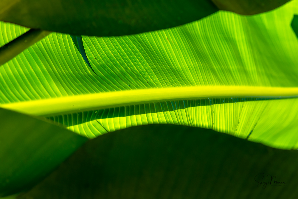 Jamaica Palm Leaves 3